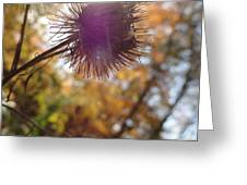 Purple Fuzzy Greeting Card