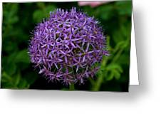 Purple Globe Thistle Greeting Card