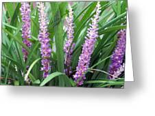 Purple Grass Greeting Card