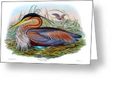 Purple Heron Antique Bird Print John Gould The Birds Of Great Britain Greeting Card