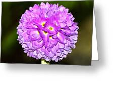 Purple Himalayan Primrose Greeting Card