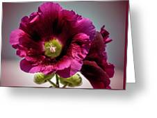 Purple Hollyhock Greeting Card