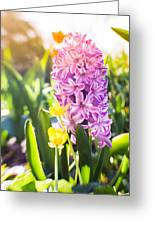 Purple Hyacinth Greeting Card