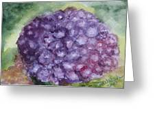 Purple Hydrangea Greeting Card