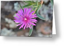 Purple Ice Flower Close Up Greeting Card