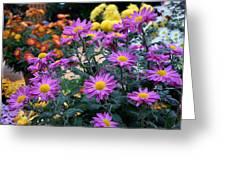 Purple In Garden Greeting Card