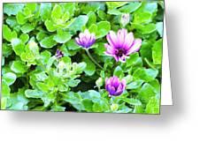 Purple In Greenery Greeting Card
