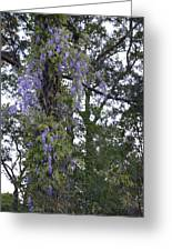 Purple In The Trees Greeting Card