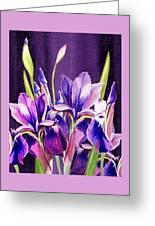 Purple Iris Dance  Greeting Card