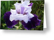 Purple Iris Flower Art Prints Garden Floral Baslee Troutman Greeting Card