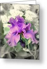 Purple Iris In Focal Black And White Greeting Card