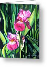 Purple Iris Greeting Card