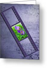 Purple Iris Passion Greeting Card