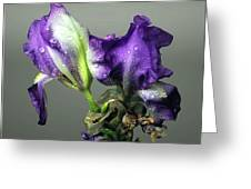 Purple Iris Water Drops Greeting Card