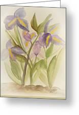 Purple Iris Watercolor Greeting Card