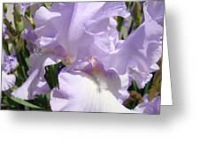 Purple Irises Artwork Lavender Iris Flowers 13 Botanical Floral Art Baslee Troutman Greeting Card