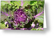 Purple Kale Greeting Card