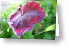 Purple Leaf Greeting Card