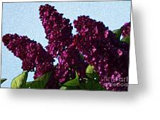 Purple Lilac 3 Greeting Card