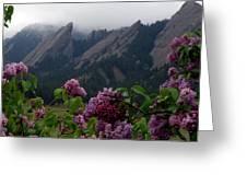 Purple Lilacs Flatirons Greeting Card