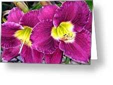 Purple Lilies Greeting Card