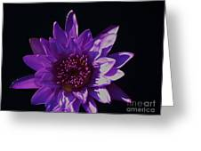Purple Lily Monet Greeting Card