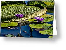 Purple Lotus Greeting Card