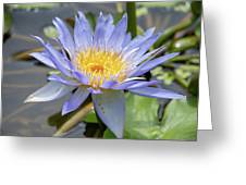 Purple Water Lily Flowers Blooming In Pond Greeting Card