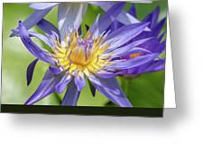 Tropical Purple Water Lily Greeting Card