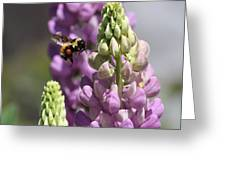 Purple Lupine Bee 4 Greeting Card