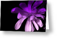 Purple Magnolia 2 Greeting Card