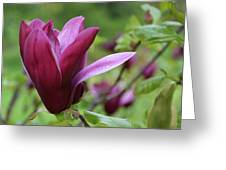 Purple Magnolia Closeup Greeting Card