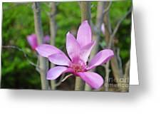 Purple Magnolia  Greeting Card