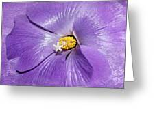 Purple Mallow Mist Greeting Card
