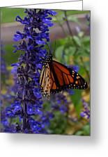 Purple Monarch Greeting Card
