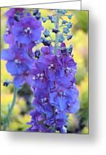 Purple Mullein Greeting Card