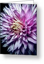 Purple Mum Greeting Card