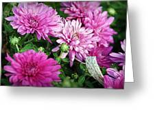 Purple Mums Greeting Card