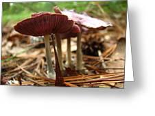 Purple Mushroom 2 Greeting Card