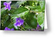 Purple On Green With Raindrops Greeting Card