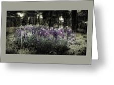 Purple On The Forest Floor Greeting Card