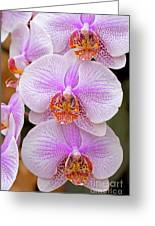 Purple Orchid 1 Greeting Card