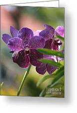 Purple Orchid Beauty Greeting Card