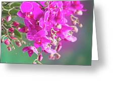 Purple Orchid Branch Greeting Card
