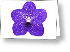 Purple Orchid On White Greeting Card