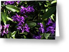 Purple Orchid Plant Greeting Card