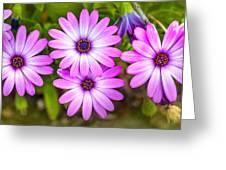 Purple Pals Greeting Card