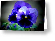 Purple Pansy - 8x10 Greeting Card