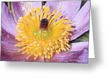 Purple Pasque Flower With Pollen Greeting Card
