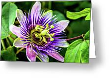 Purple Passion Bloom Greeting Card